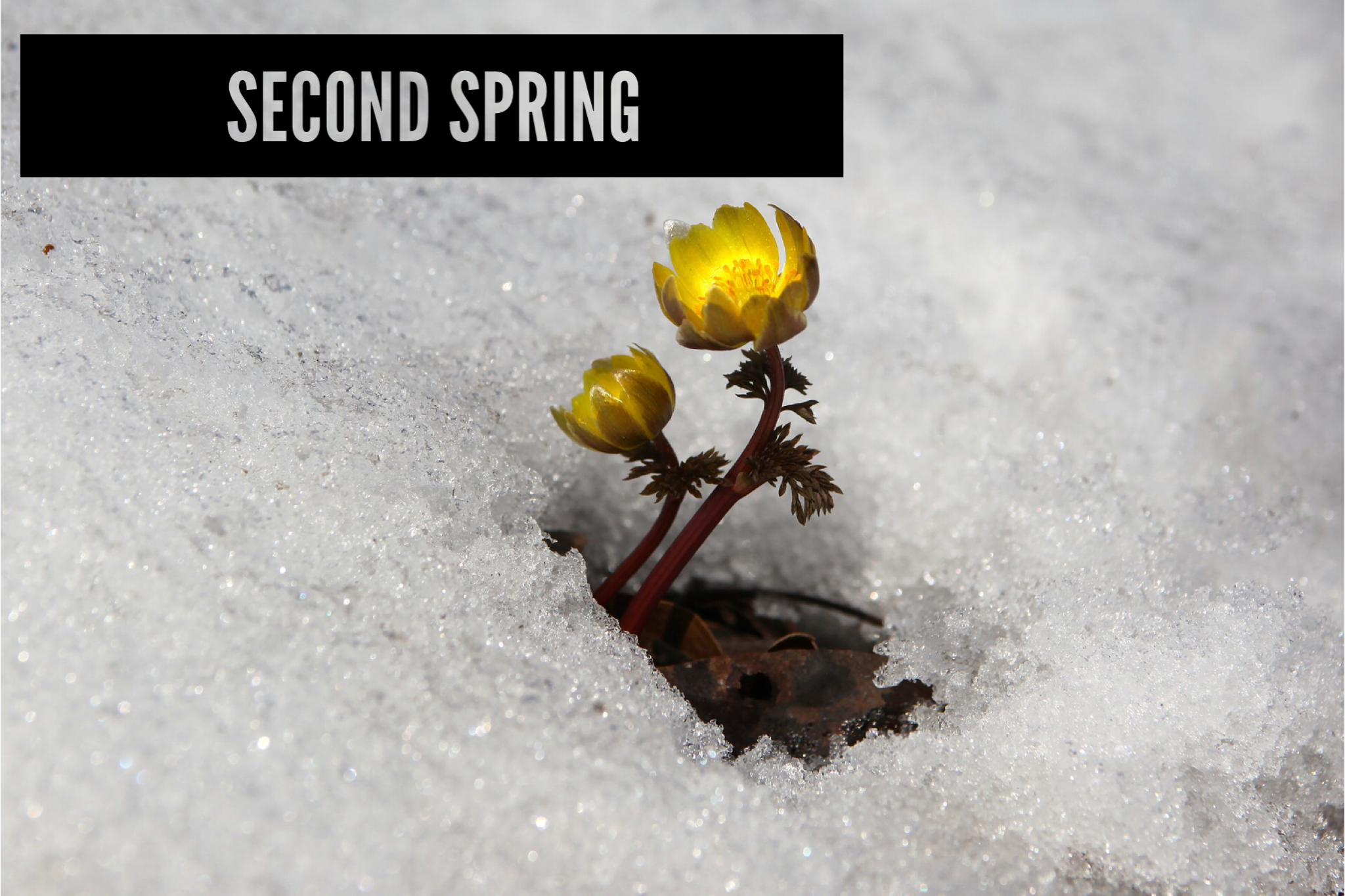 Your Menopause Perspective: Sign of Aging or Second Spring?