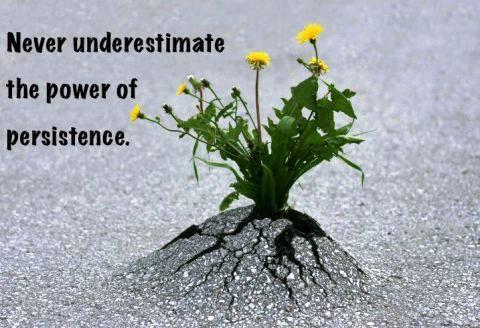 Persistence - flower pushing up through concrete