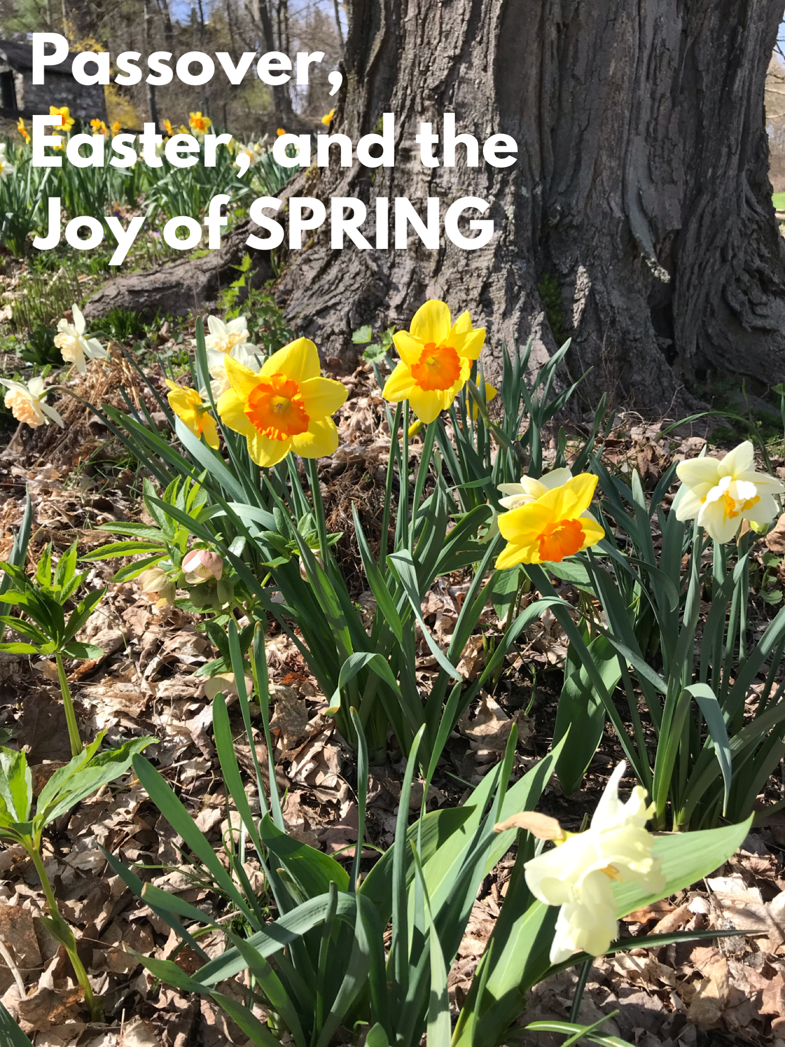 Passover, Easter and the Joy of Spring
