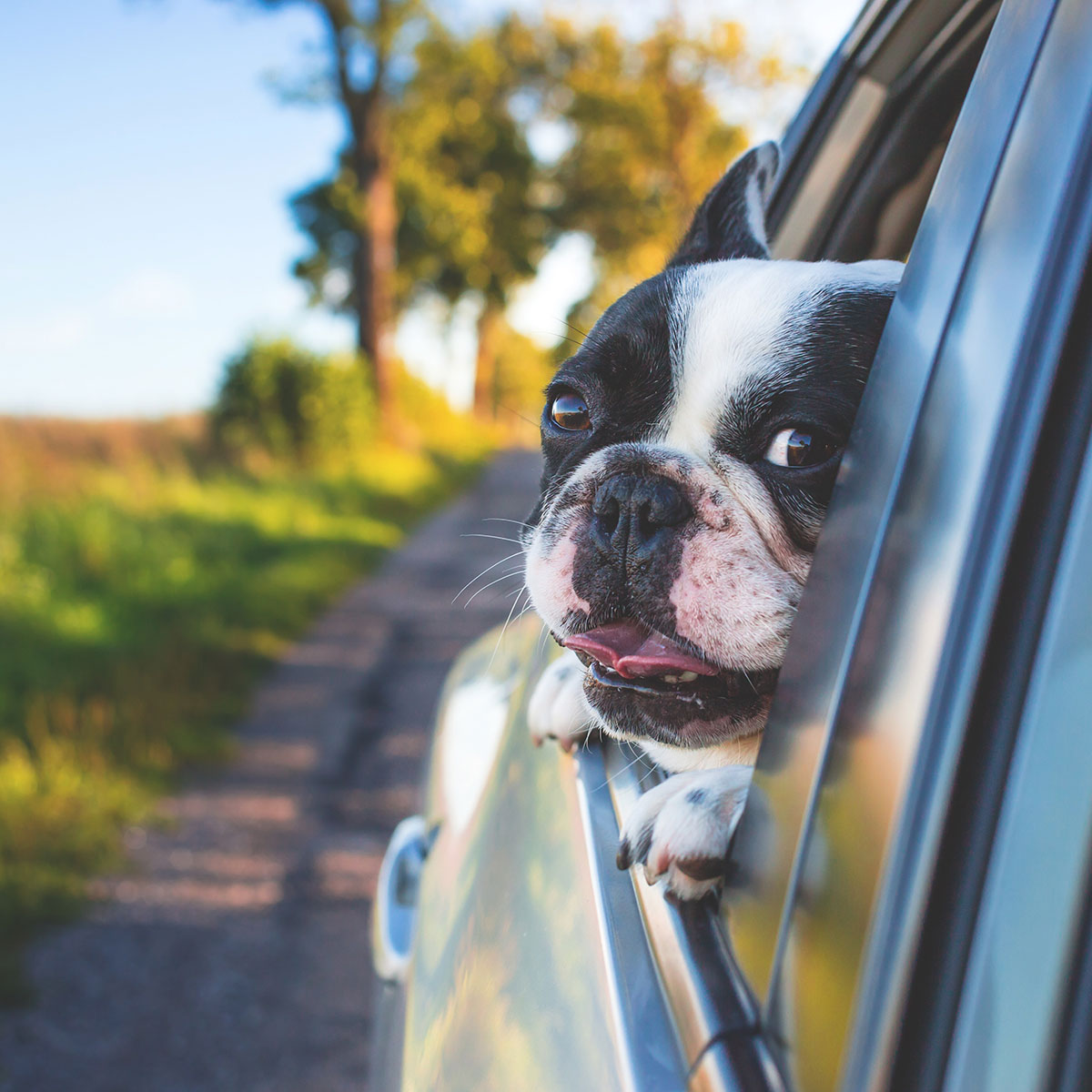 Namaste: Choosing to see the light and life lessons from a dog